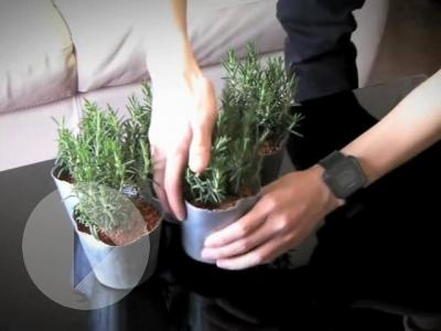 The Herbivore Kiel Hamm | Tokyo | 03:06